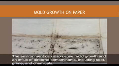 Mold Growth on Paper