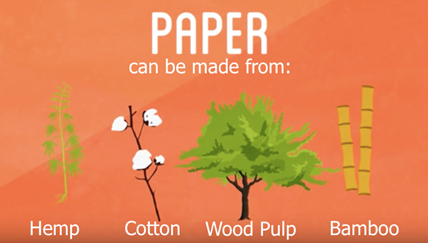 What is Paper Made Of
