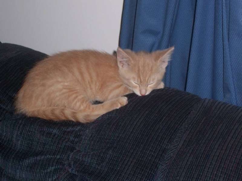 our new kitty -Snuggles-