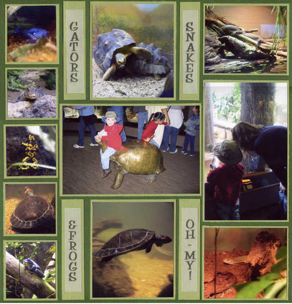 Gators, Snakes & Frogs - OH MY!