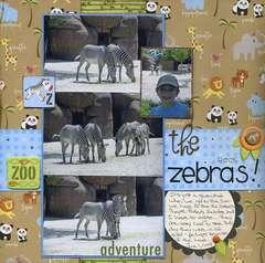 The Zebras Rock