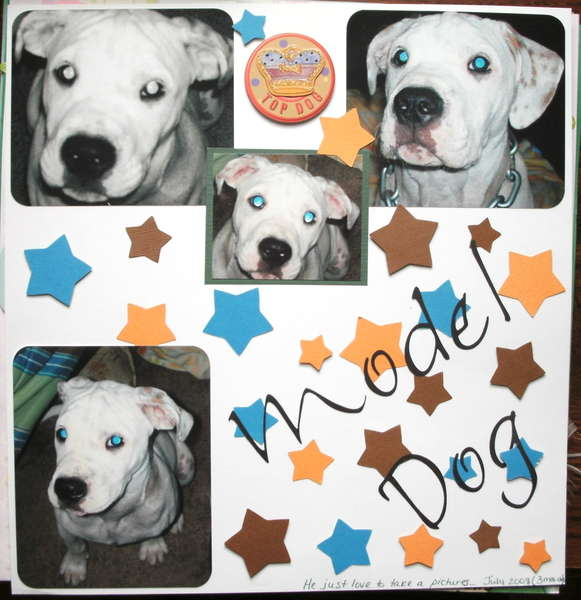~*~Model Dog~*~