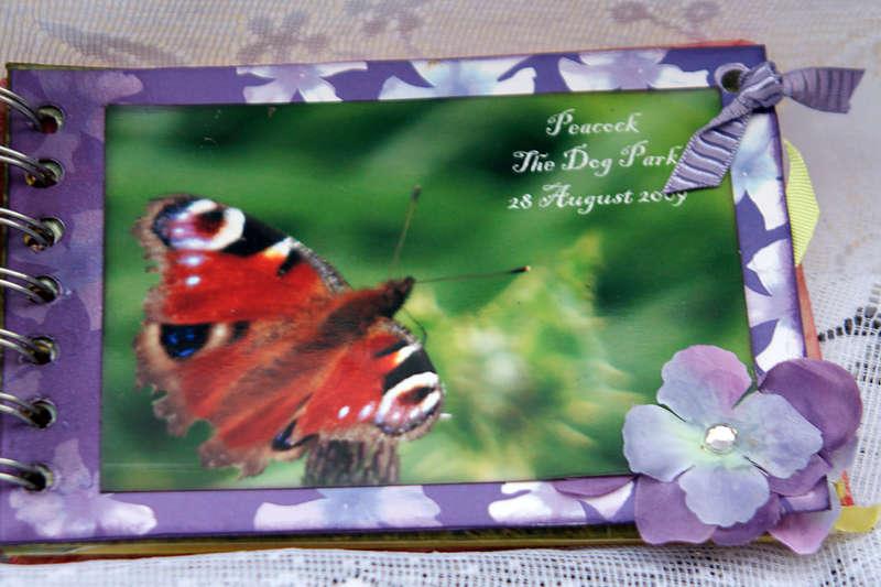 Butteflies Mini Book
