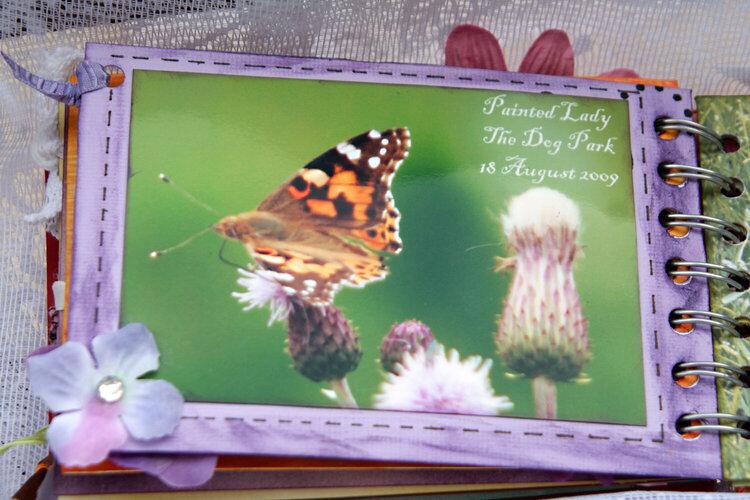 Butterflies Mini Book
