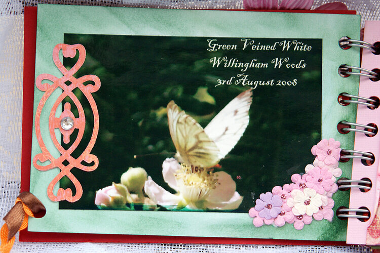 Butterflies - mini album