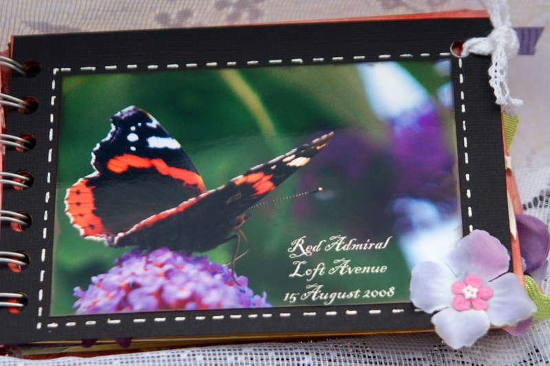 Butteflies - Mini book