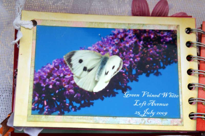 Butterflies - mini book