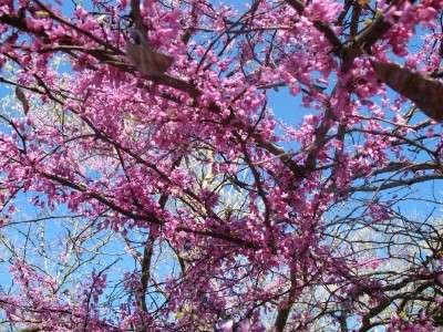 Under purple tree