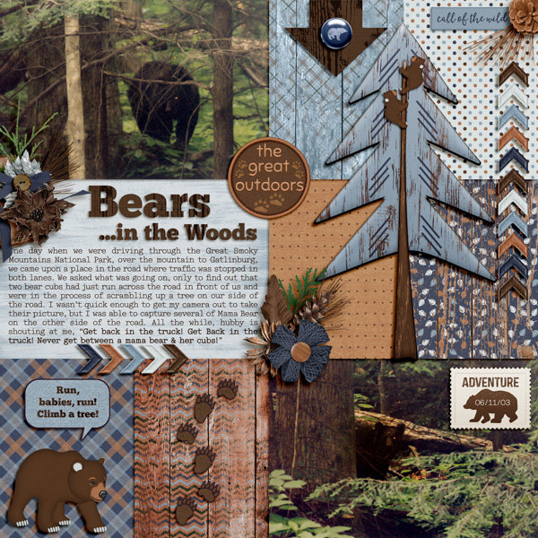 Bears...in the Woods