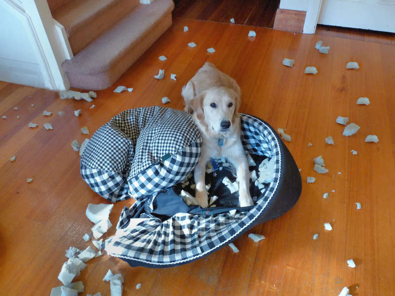 Apparently Riley thinks beds are over rated too! - for Elaine