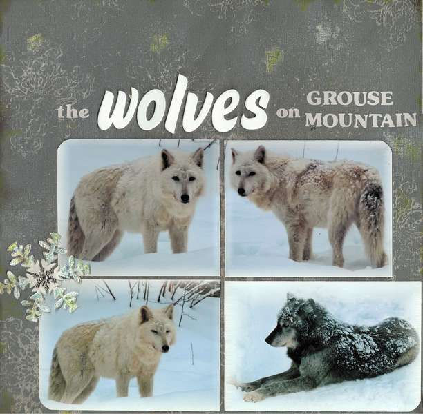 The wolves on Grouse Mountain page 1