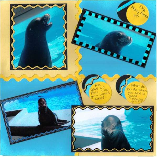 the many faces of the sea lion