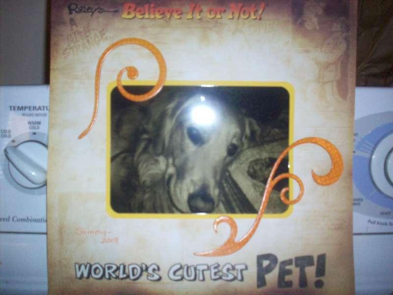 World's Cutest Pet - Sammy