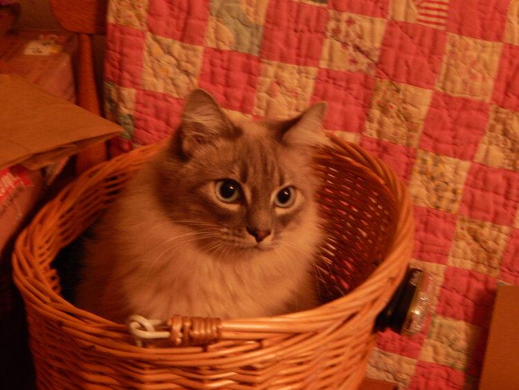 Richie in bicycle basket