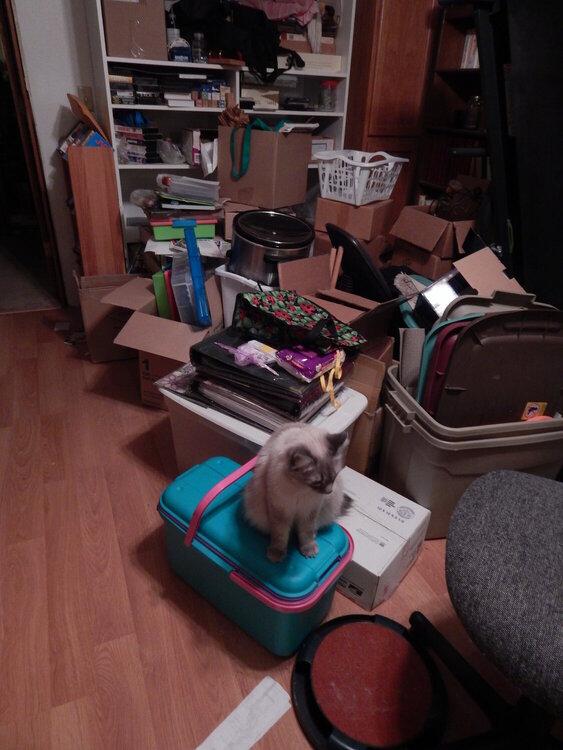 Scraproom Mess~