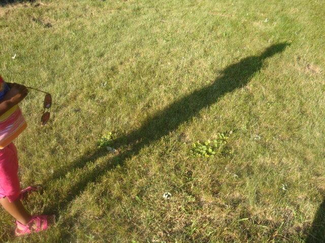 Great grand long Shadow