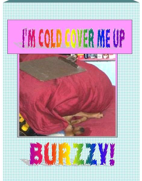 BURZZY! I'M COLD! COVER ME UP! WHERE'S BLANKY?
