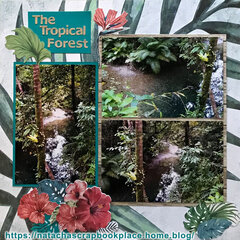 The Tropical Forest