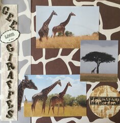 Gee, Look at the Giraffes