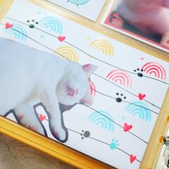 Cute Cat Pocket Page