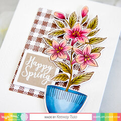 Potted Lily with plaid background