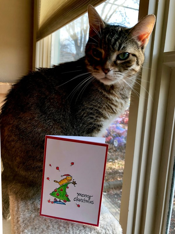Cat in Christmas Tree Chaos Card with my cat