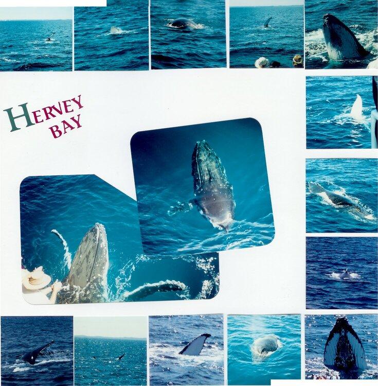 Whale Watchiing 2
