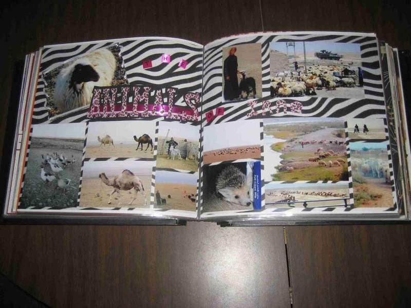 Animals Of Iraq