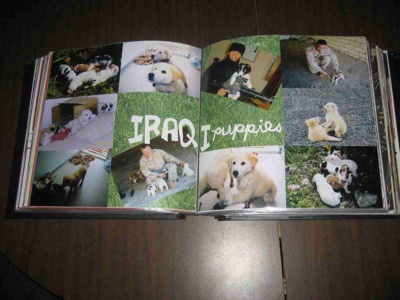 Iraqi Puppies