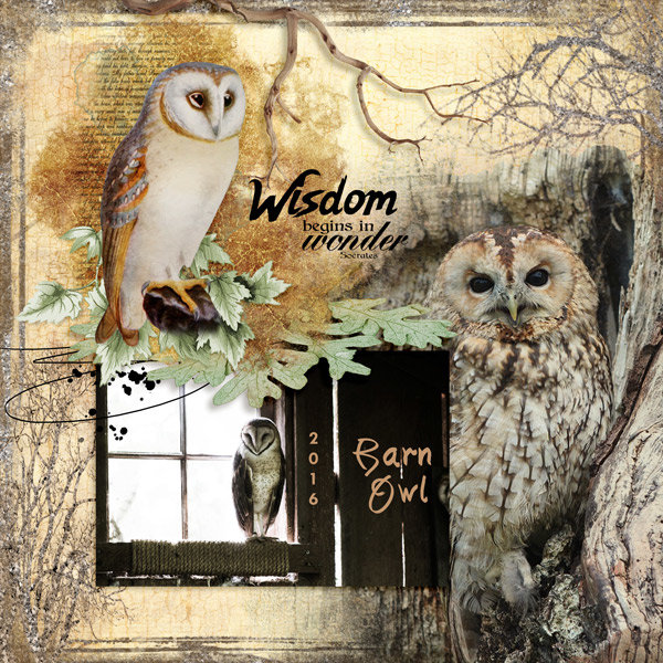 Wise Barn Owl