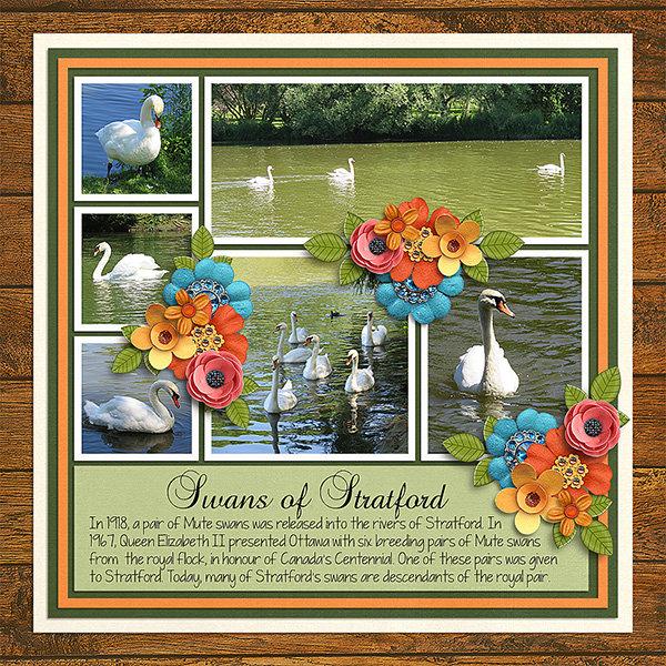 Swans of Stratford