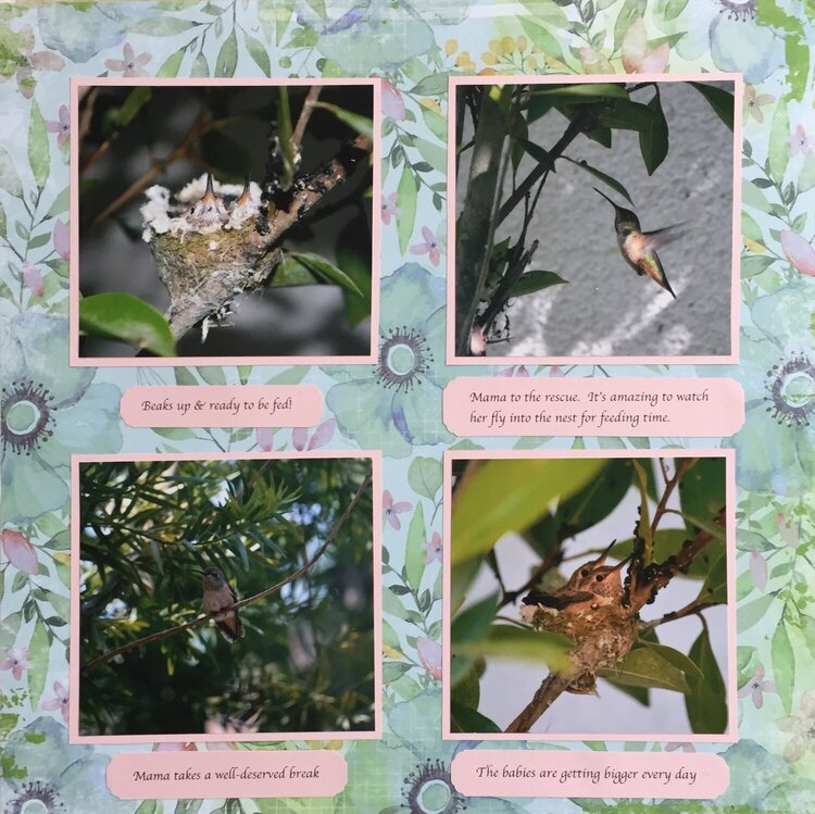 2013 Hummingbirds p. 2