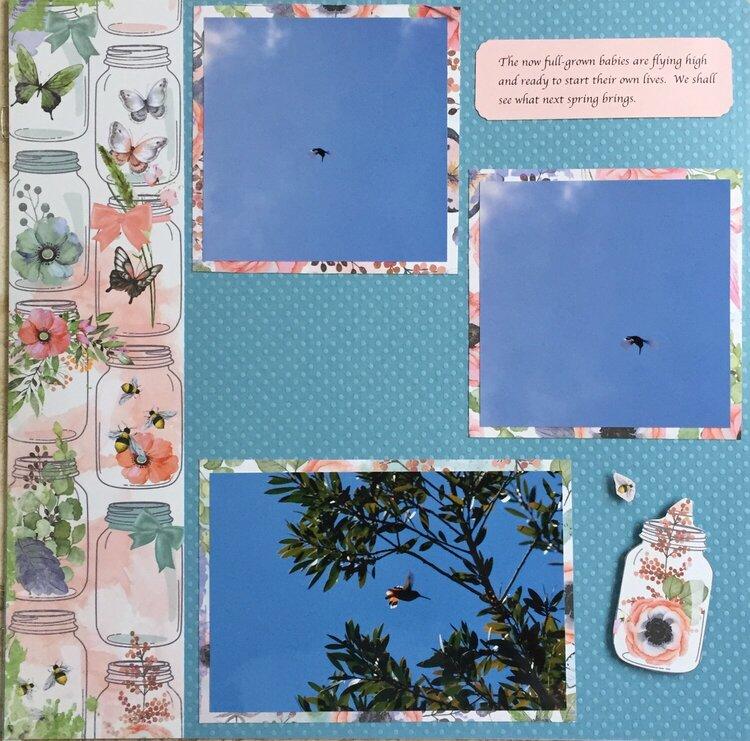 2013 Hummingbirds p. 4