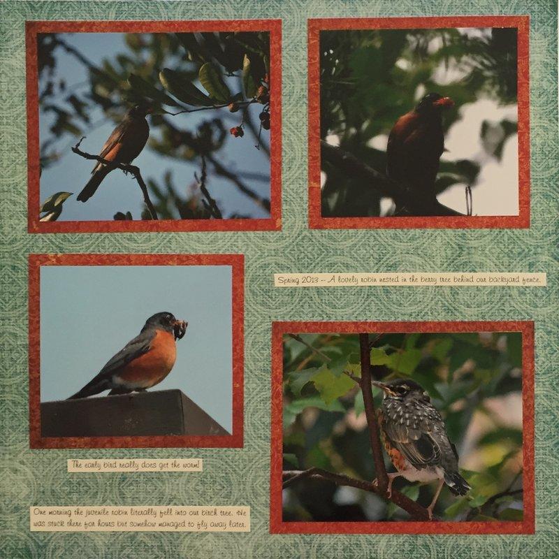 Backyard Robins Spring 2013