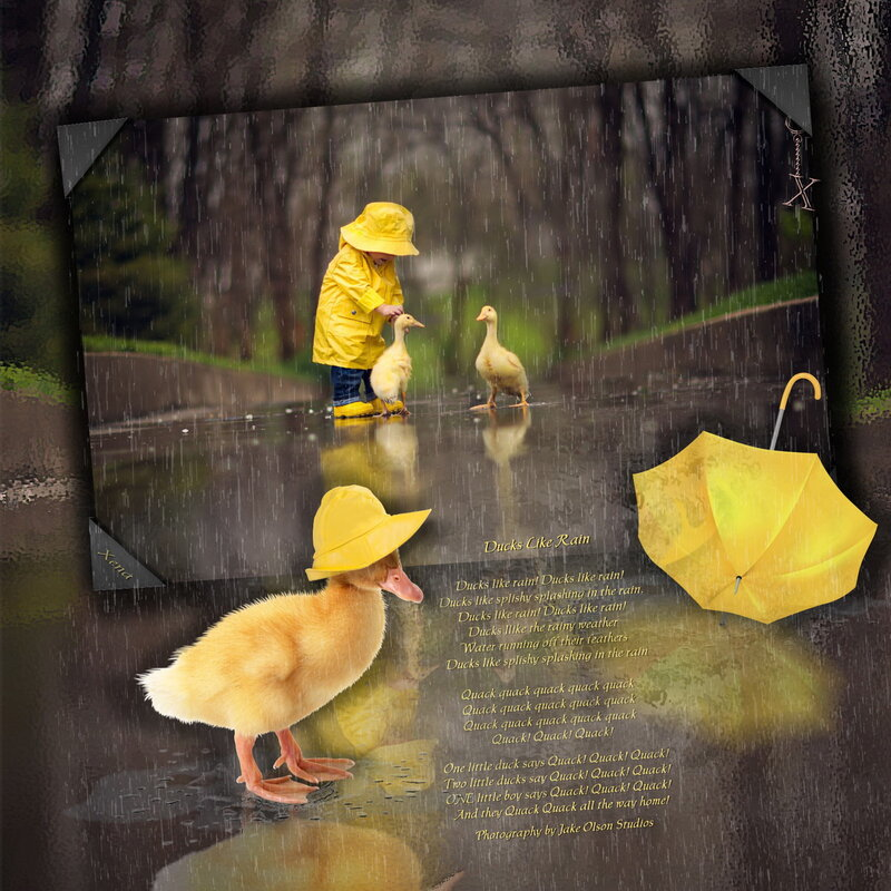 Ducks Like Rain
