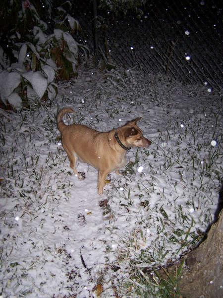 My baby boy's first snow