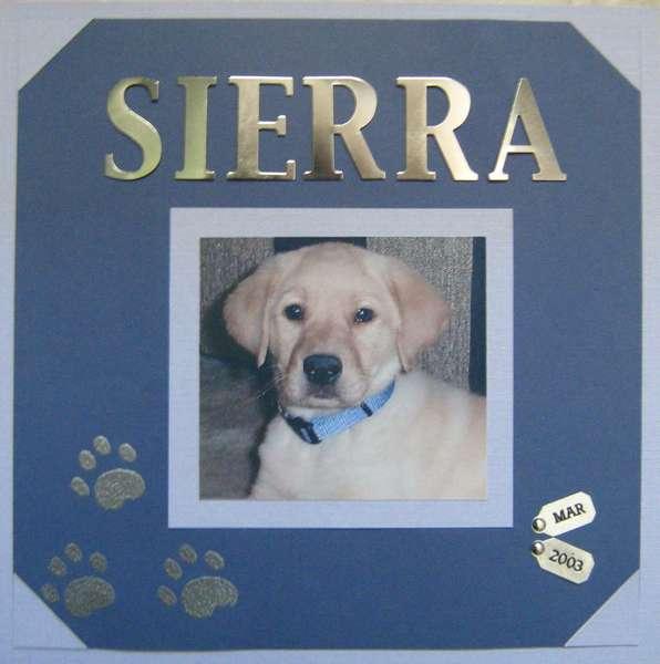 Sierra - Puppy