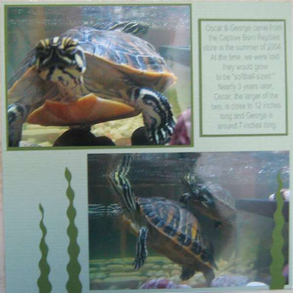 Turtles - Page 2