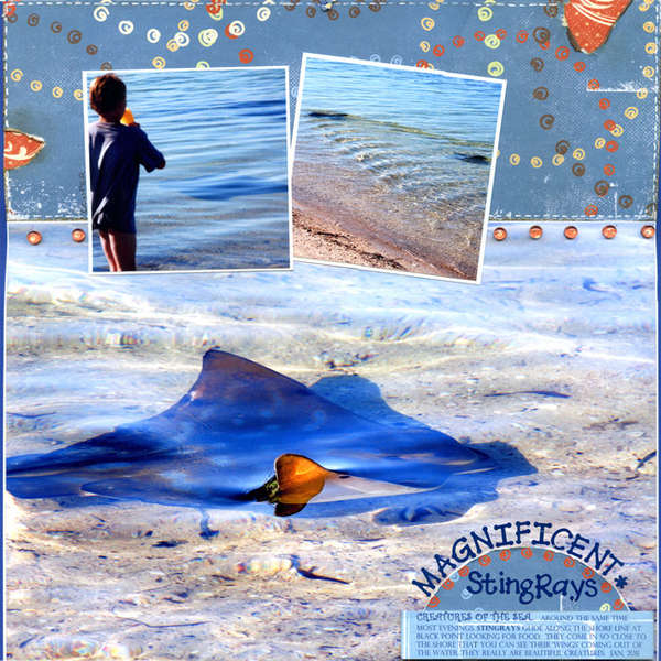 Magnificent Stringrays