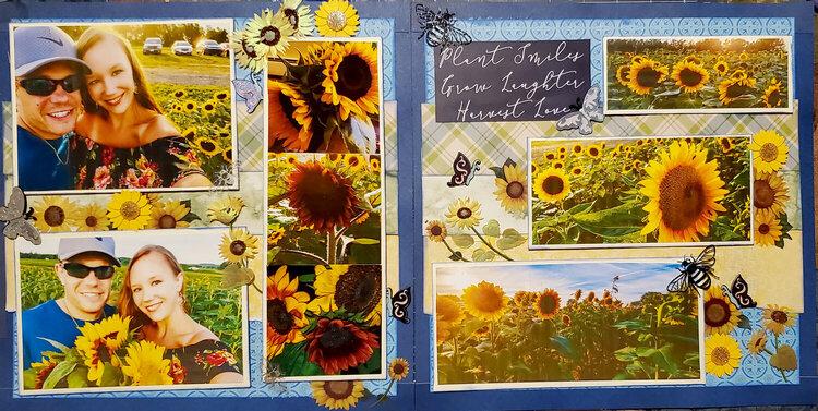 Sunflower fields whole layout