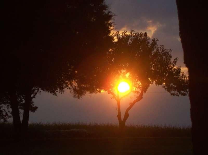 Peach Tree Cradling the Sun