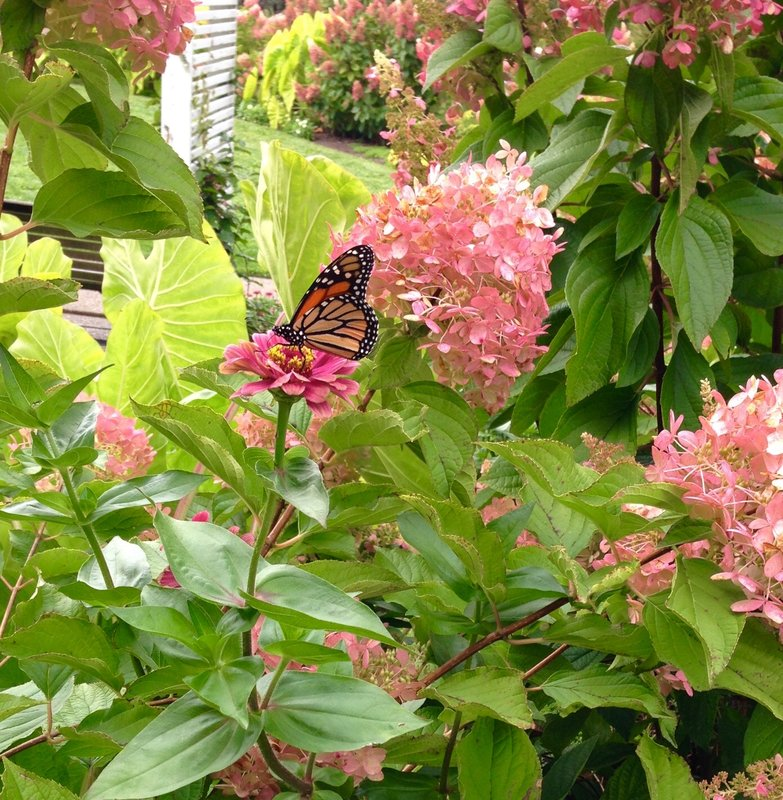 Butterfly Photos I Took Whlle Visiting Pittsburgh