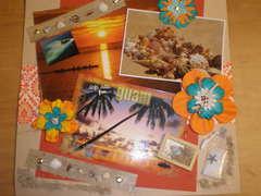 Beach Shells Collector