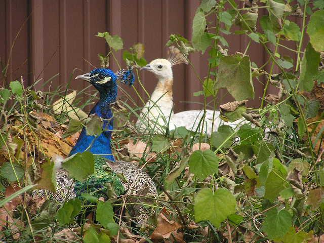 November Photo Fun Mini - Bird
