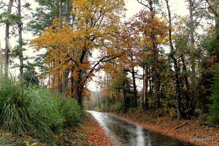 November Photo Fun - Mini #6 Leaves