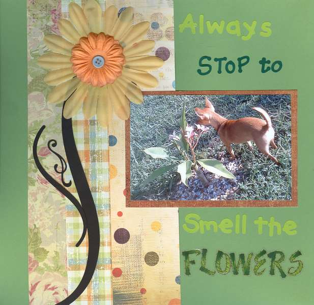 Smell The Flowers