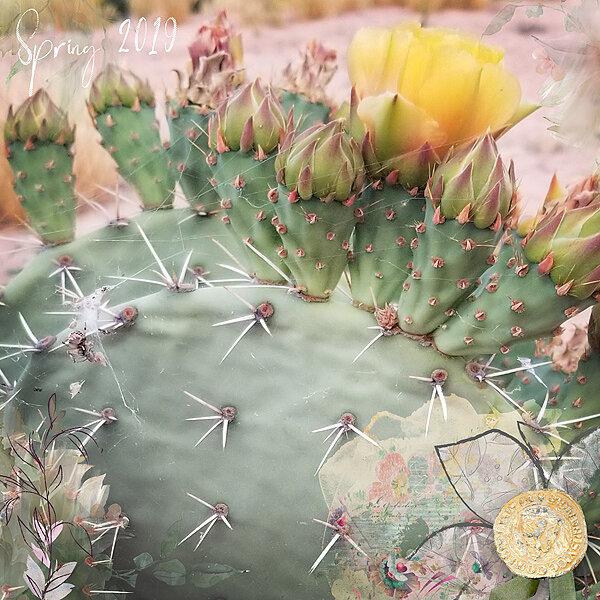 Spider web cactus