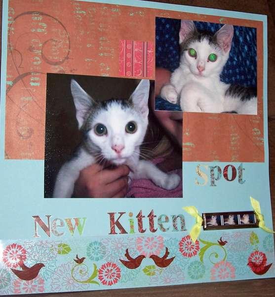 New Kitten (1/2)
