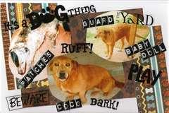 Mini Album Outside dogs