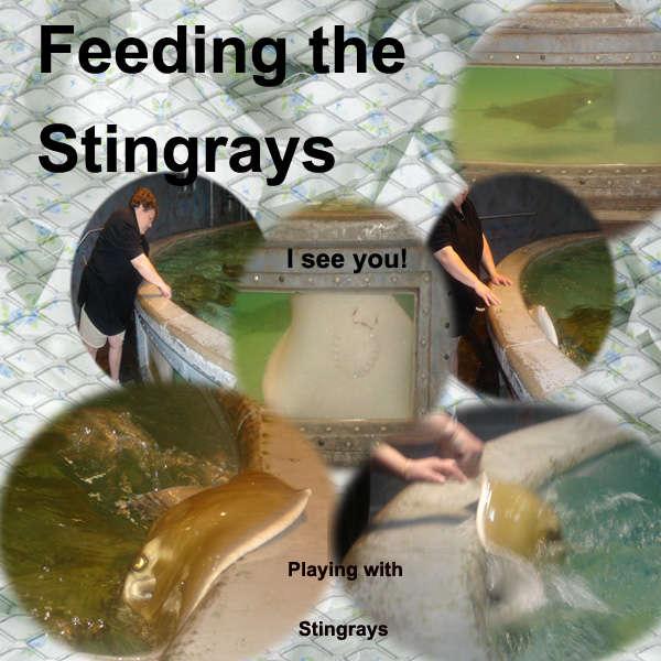 Feeding the Stingrays